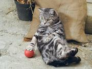 "Watch free video Cravendale Commercial ""Cats With Thumbs"""