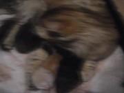 צפו בסרטון מצויר בחינם Cat Mom Hugs Her Baby Kitten