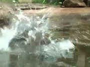 Watch free video Cat Catches Living Fish