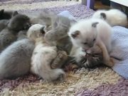 Watch free video Sweet Little 3 Week Old Baby Cats