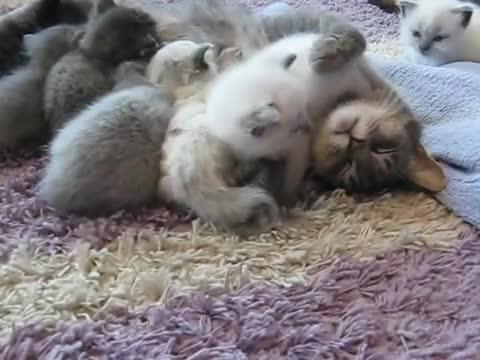 Watch free video Sweet Little 3 Week Old Baby Cats