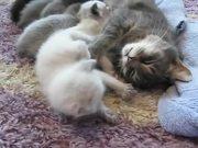 Mira dibujos animados gratis Sweet Little 3 Week Old Baby Cats