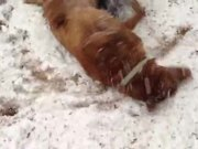 Watch free video Snow Dogs