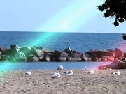 Watch free video Intelligent Life & Animals