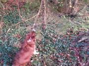 Watch free video A Very Smart Dog