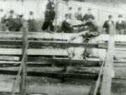 Bucking Bronco 1898