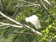 Watch free video Sarasota Jungle Gardens - Birds at the Lagoon