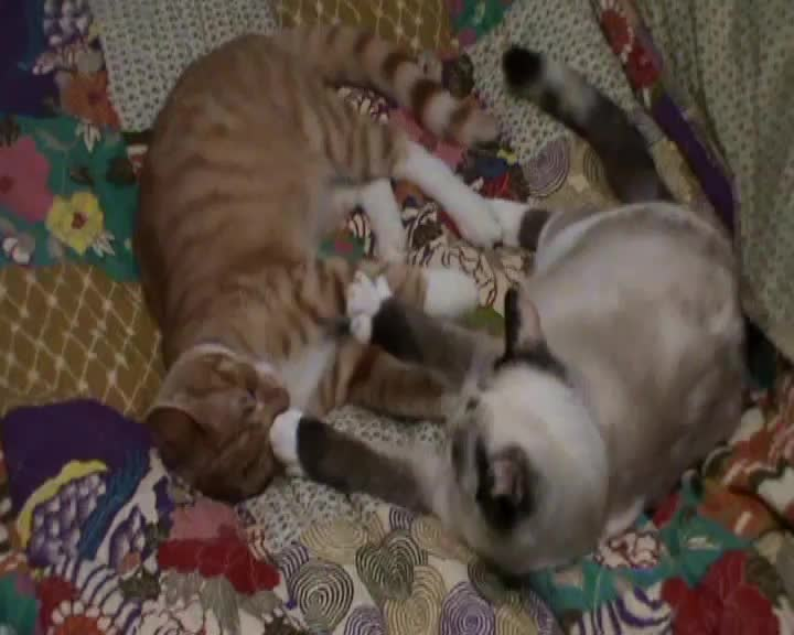 Watch free video Young Cats Play-Fighting and Cleaning