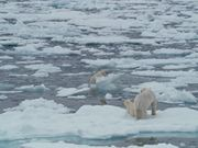 Watch free video To The Arctic - Polar Bear Family Featurette