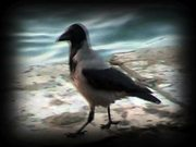Watch free video A Scavenger Type…