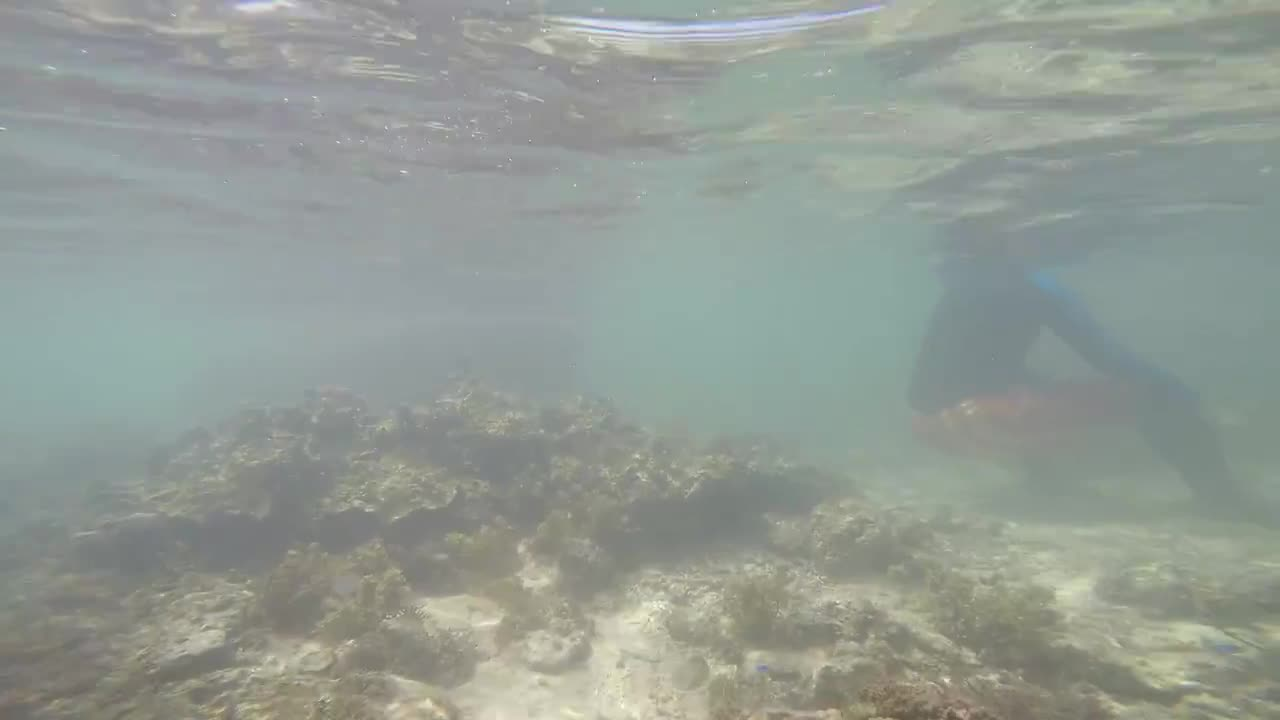 Watch free video Coral Reefs and Fishes in Deep Blue Water