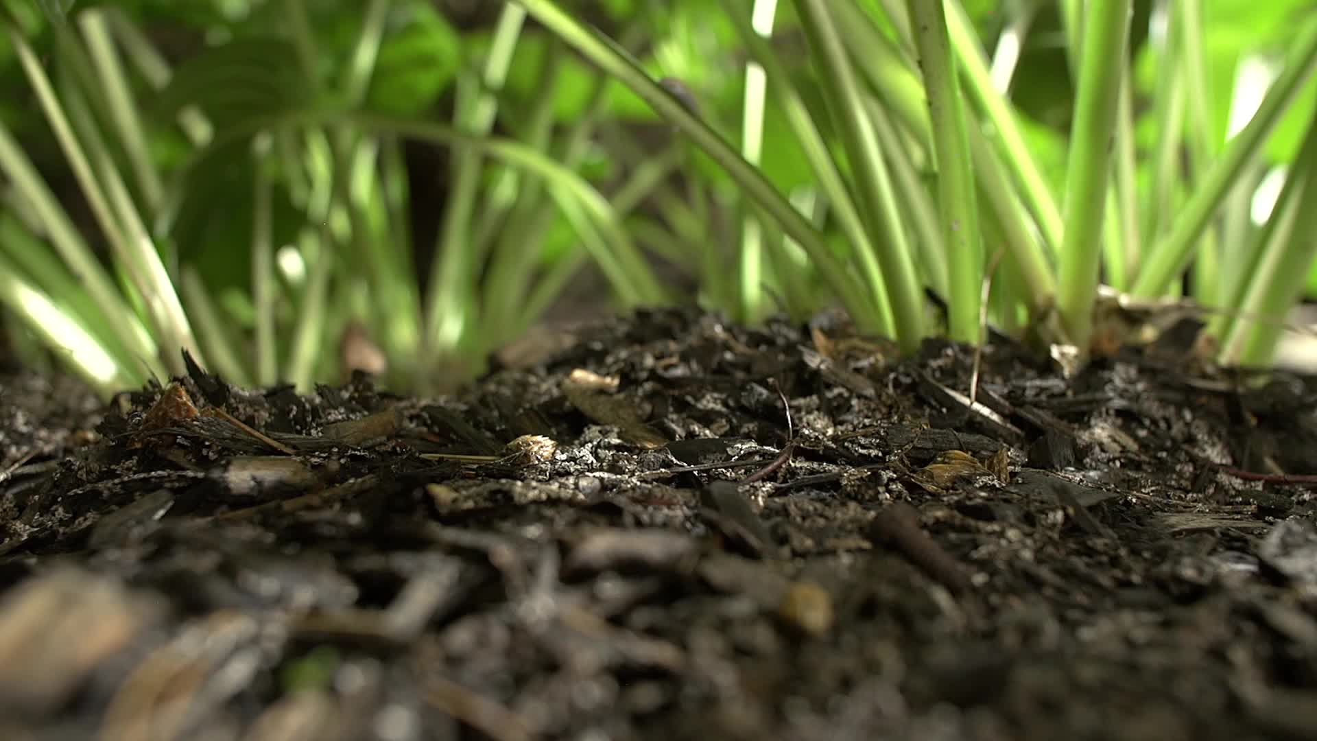 Watch free video Midnight Garden Time Lapse