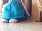 Watch free video Funny Kitty