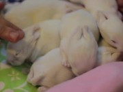 Watch free video Baby Bunnies with an Epic Soundtrack