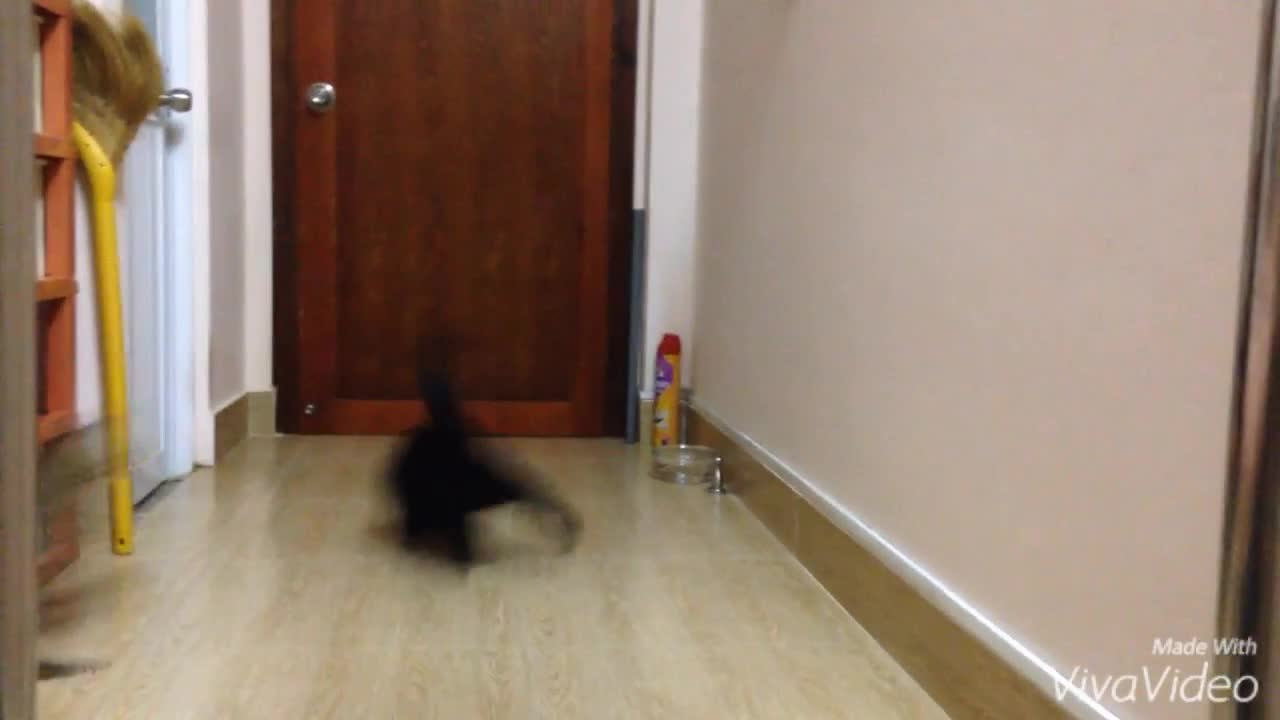 Watch free video Cat's Attack