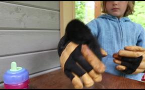 Watch free video The Bear and Nutty the Orphan Squirrel
