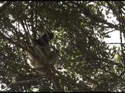 Watch free video One Day on Earth 12.12.12 - Habitat (Madagascar)