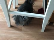 Watch free video Shaggy Doggie