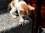 Watch free video Colorful Kittens