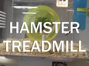 Watch free video Hamster Treadmill