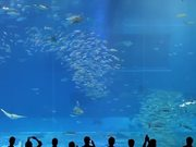Mira dibujos animados gratis Camille Saint-Saëns - Aquarium