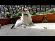 Watch free video Italian Cats-A-Nova Ticklin' Your Funny Bone