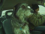 Watch free video Happy Dog Fun