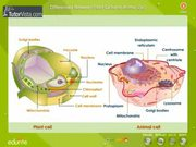 Watch free video Different Between Plant Cell and Animal Cell