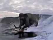 Watch free video Accenture Commercial: Surfing Elephant
