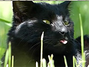 Watch free video Black Cat in Grass