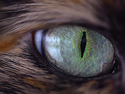 Watch free video Spellbinding Cat Eye - Extreme Close Up