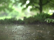 Watch free video Beautiful Raindrops in Slow Motion