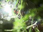 Watch free video Spider, Web, and Fly in Macro View
