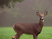 Watch free video Young 4-Point Buck