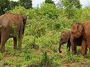 شاهد كارتون مجانا Majestic Elephants