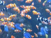 Mira dibujos animados gratis Finding Nemo and Dory