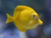 Mira dibujos animados gratis Cute Little Yellow Fish