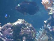 Mira dibujos animados gratis A lot of Fishes Swimming