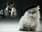 Watch free video Sauza Tequila Commercial: Fireman and Kitten