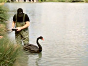 Watch free video Canal+ Commercial: Black Swan