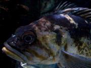 Mira dibujos animados gratis An Odd Fish