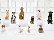 Watch free video Volkswagen Commercial: The Bark Side
