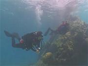 Watch free video Tropical Scuba Diving