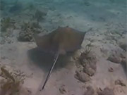 Watch free video Dry Tortugas National Park