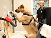 Watch free video SPCA/MINI Video: Can You Teach a Dog to Drive?