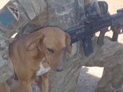 Watch free video Bringing Home the Dogs of War