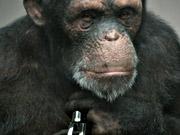 Watch free video PETA : 98% Human