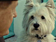 Watch free video Cesar Commercial: Love Them Back