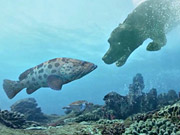 Mira dibujos animados gratis Folksam Commercial: Diving Dogs