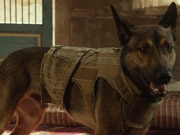 """Watch free video Max """"Hero Dogs"""" Featurette"""